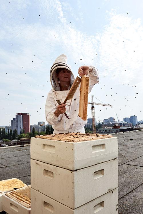 stadtbienen, bienen, stadtbienenhonig, erika mayr, honig, Saskia Uppenkamp; photographer; portrait; Berlin; Fotograf