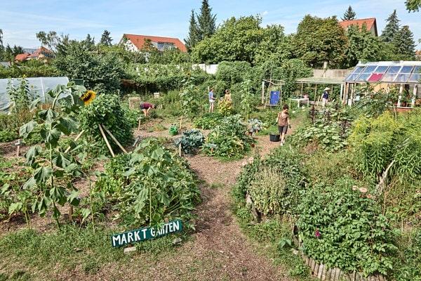 peace of land, permakultur, berlin, saskia uppenkamp, reportage, nachhaltigkeit, energiewende, portrait, fotograf, berlin, gartenprojekt
